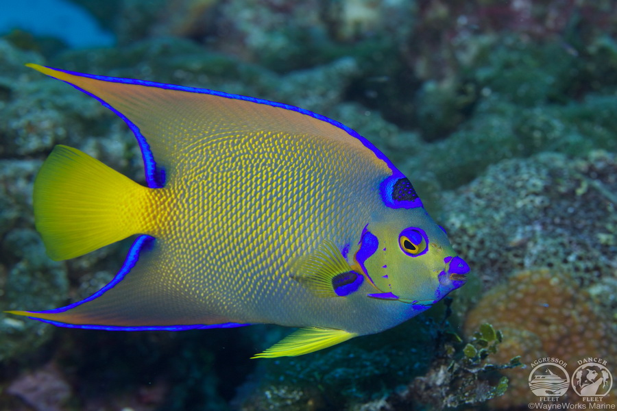 Bahamas Aggressor Liveaboard Diving World Duikvakanties